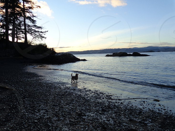 Buster beach photo