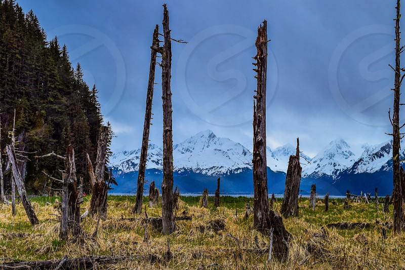 Alaska wood fire mountains water nature photo