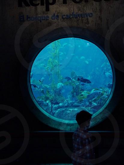 aquarium fish photography photo