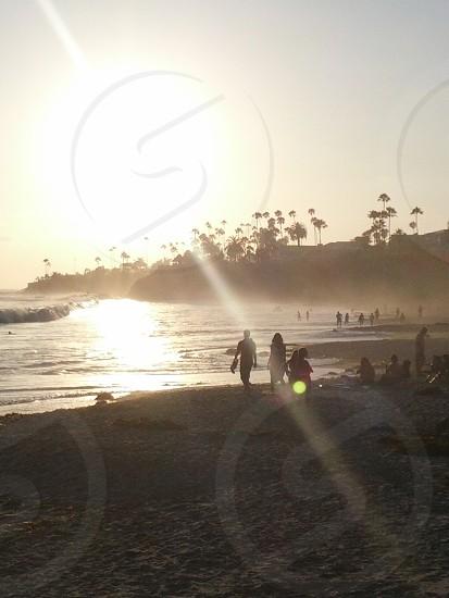 beach California palm tree sun summer ocean photo