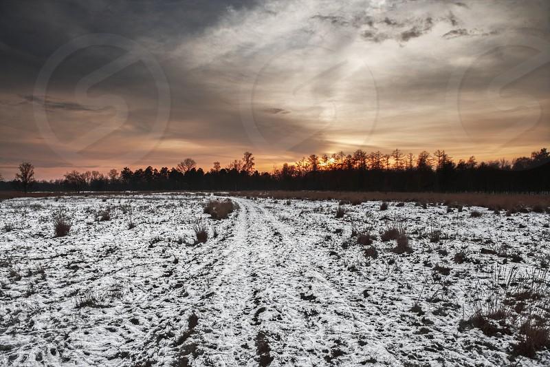winter snow tracks landscape nature sunset clouds trees heathland photo