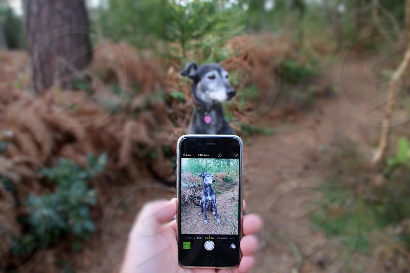 black iphone camera aimed at black dog sitting on dirt trail photo