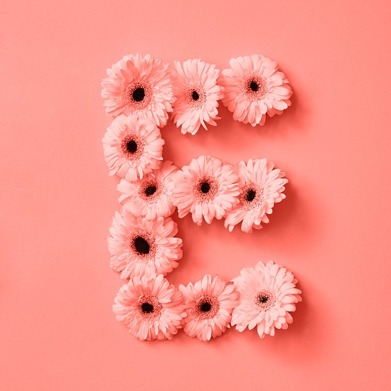 Decorative floral pattern made of gerbera flowers on a color background of the year 2019 Living Coral Pantone. Letter E part of the word LOVE. Concept St. Valentine's Day or Mother's Day. photo