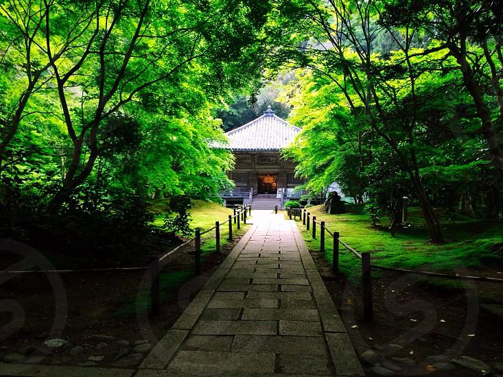 photo of pathway near tree at daytime photo