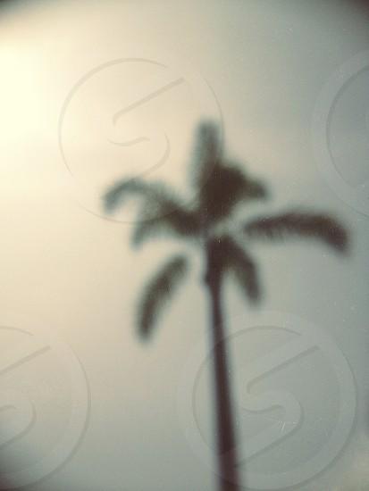 palm tree shadow on white wall photo