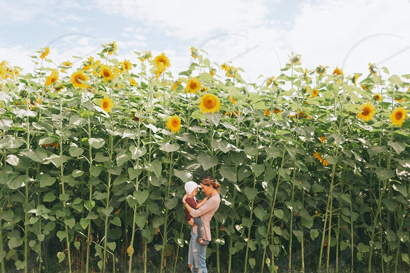 A young mother holding her little girl in a sunflower field.  photo