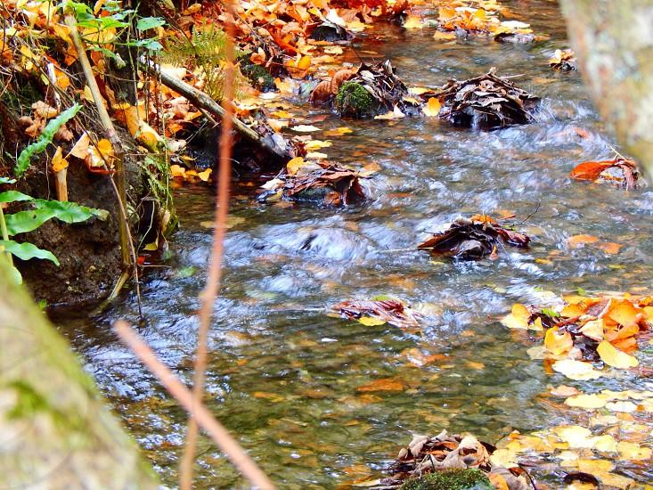 Autumnal river walks  photo
