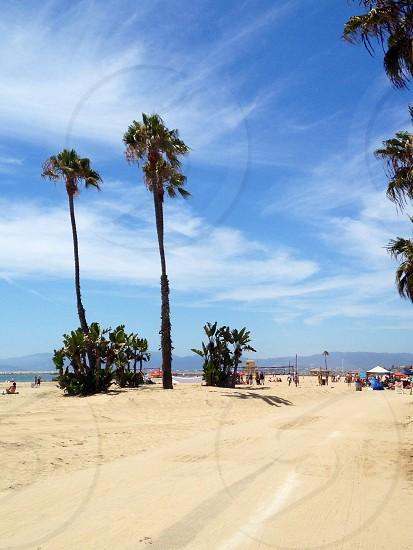 Palms over Nets - Playa del Rey CA photo