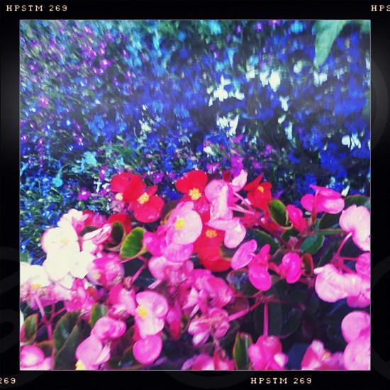 Flowers pink red blue violet indigo white purple green photo
