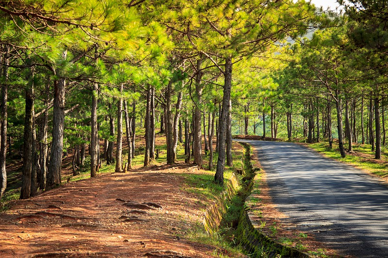 Đà Lạt or Dalat is the capital of Lâm Đồng Province in Vietnam. The city is located 1500 m (4900 ft) above sea level on the Langbian Plateau in the southern parts of the Central Highlands region. In Vietnam Da Lat is a popular tourist destination photo