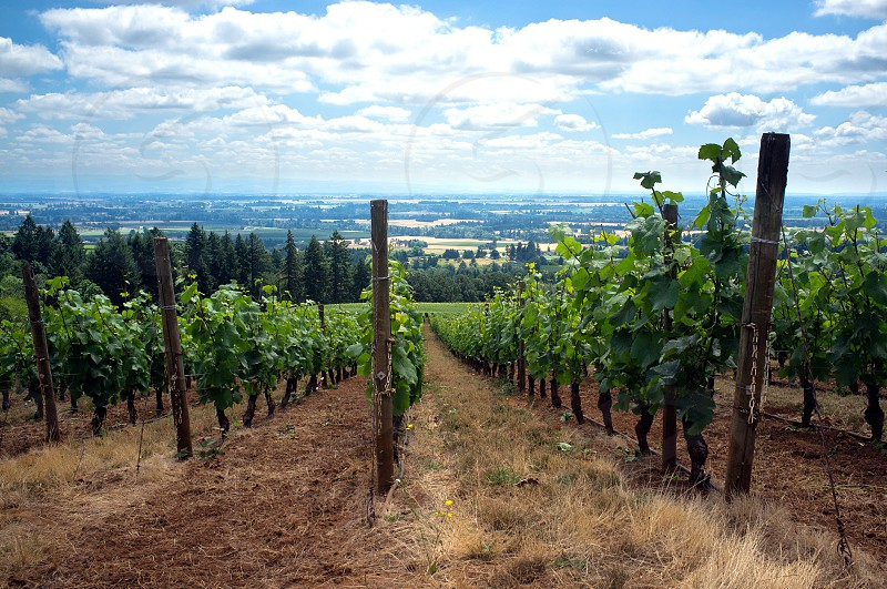 Oregon Wine Country photo