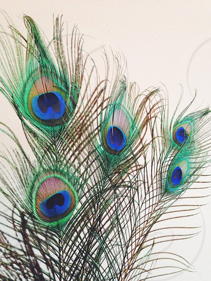 close up view of peacock feather photo
