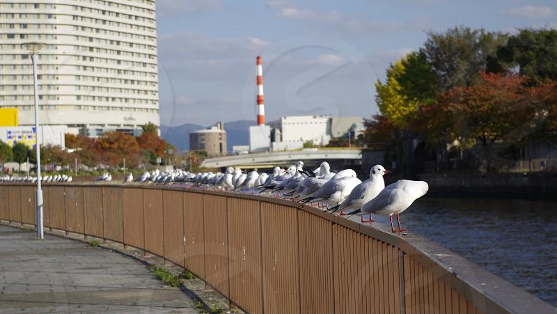 連なる鳥達。 #bird photo