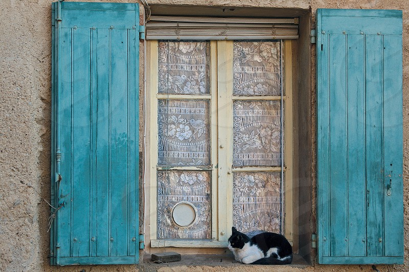 Black and white cat on window sill with teal (blue green) painted shutters in Provence France photo
