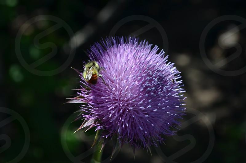 Bee Happiness photo