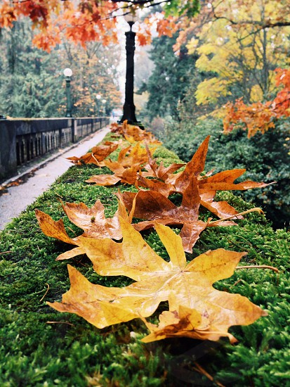 orange yllow leaves photo