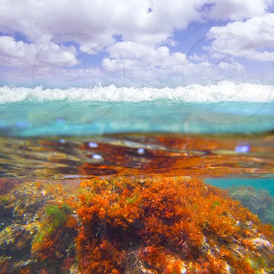 Mediterranean underwater seaweed algae in Denia Javea Alicante spain photo