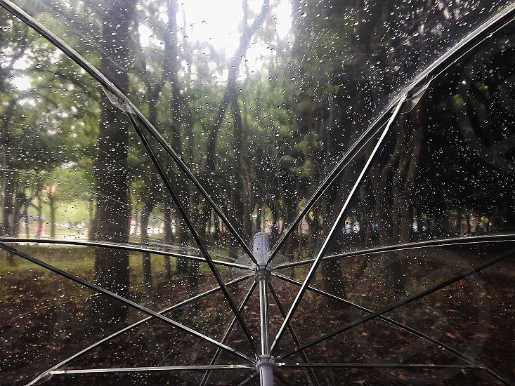 clear plastic umbrella  photo