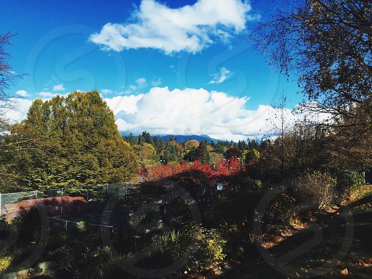 Stanley Park Landscape photo