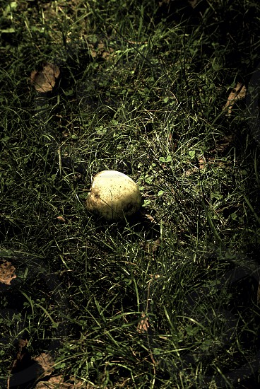 Apple green apple dark foreboding fall autumn  photo