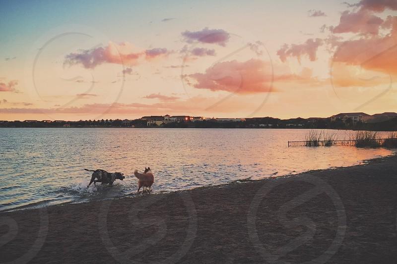 Happiness lake sunset dogs playing Florida photo