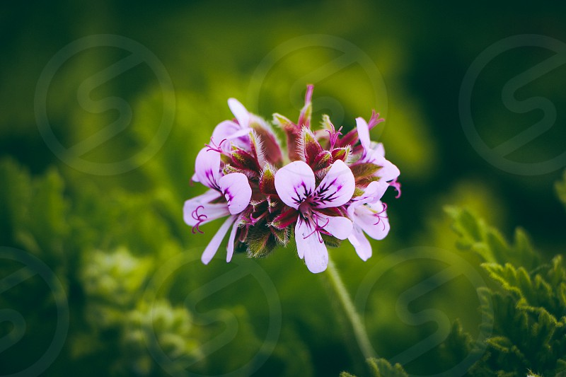 purple and white flower photo