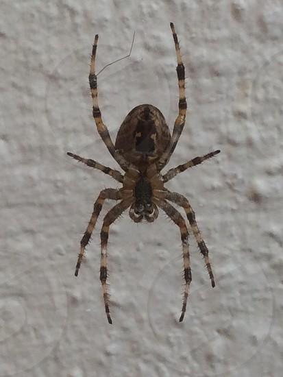 Crazy Spider  photo