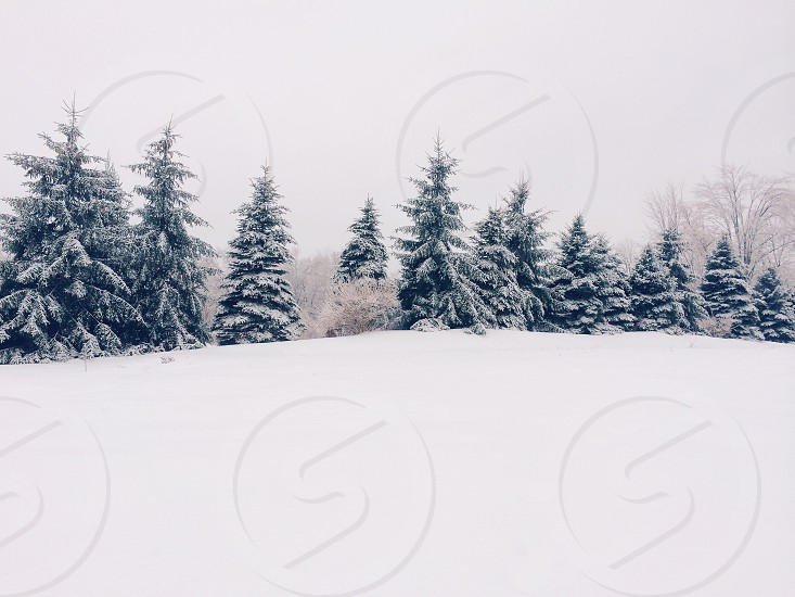 view of snowy forest photo