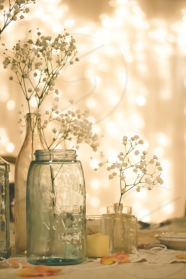 white plant in glass jar photography photo