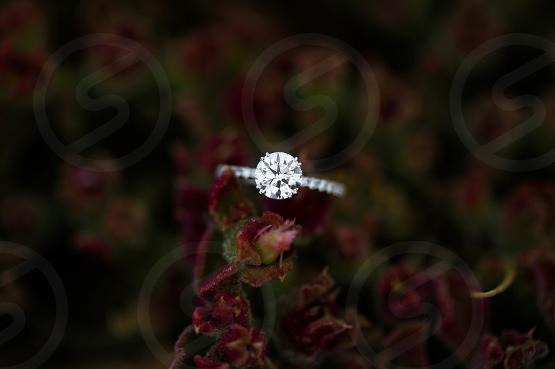 round diamond engagement ring on a purple flower photo
