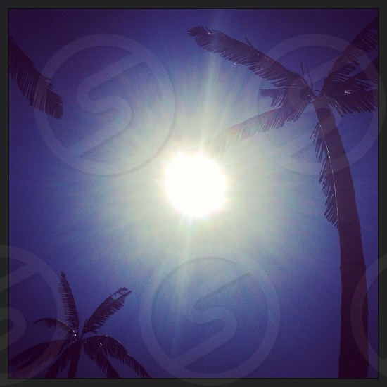 Palm trees in the sun.  photo