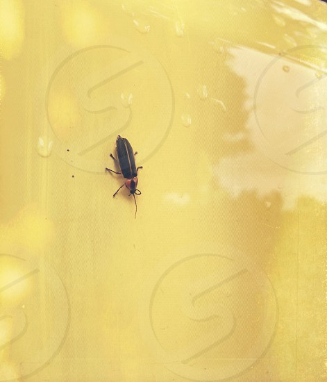 A firefly on a sunny day photo
