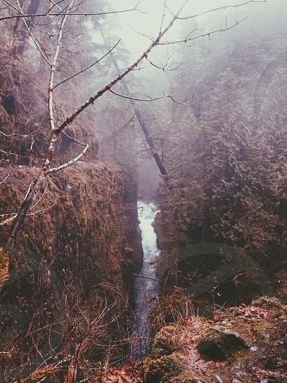 Eagle Creek Trail Oregon. photo