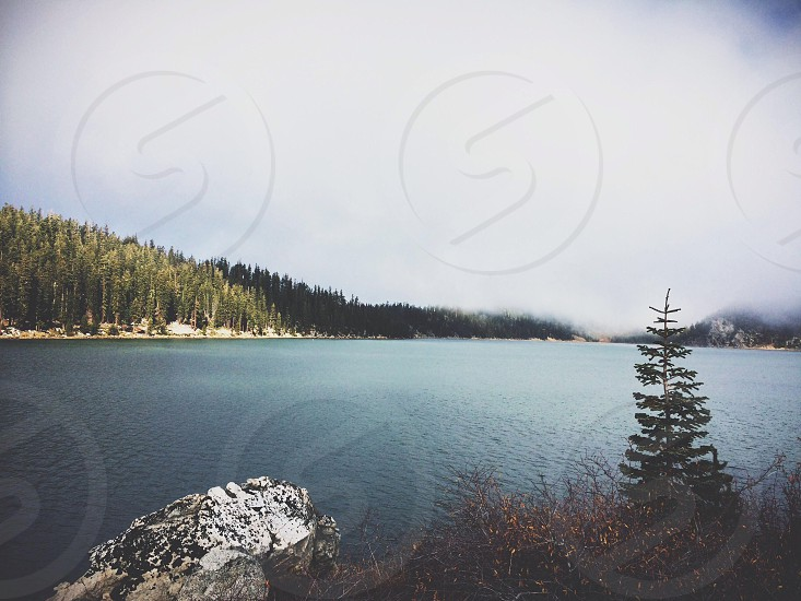 lake side view photo