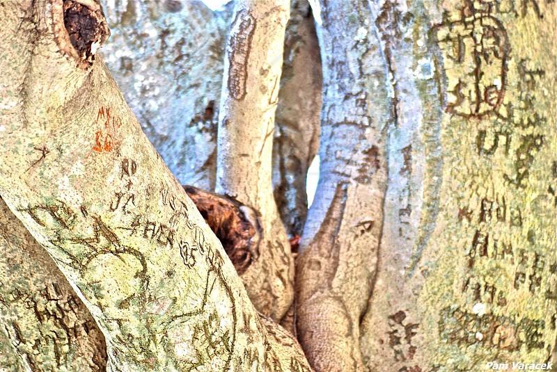 Tree graffiti photo