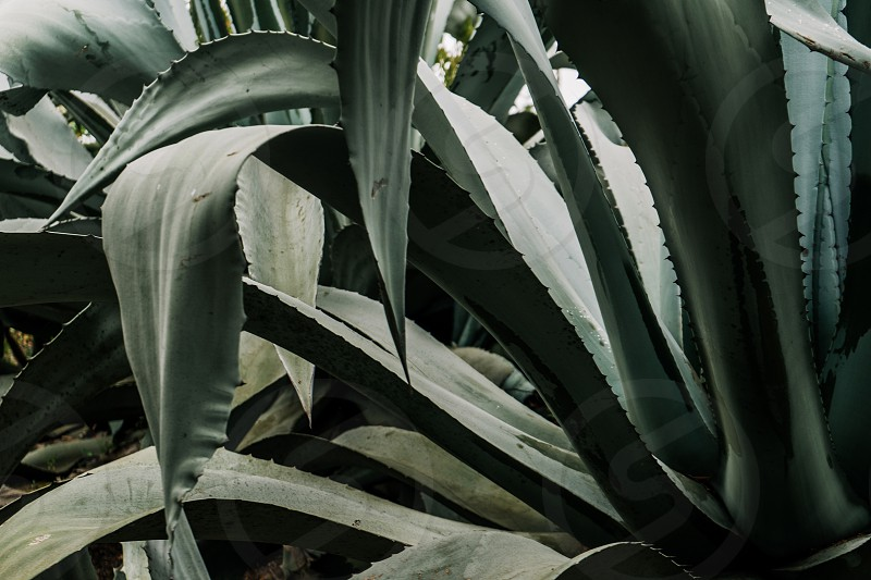 plants from a mexican garden photo