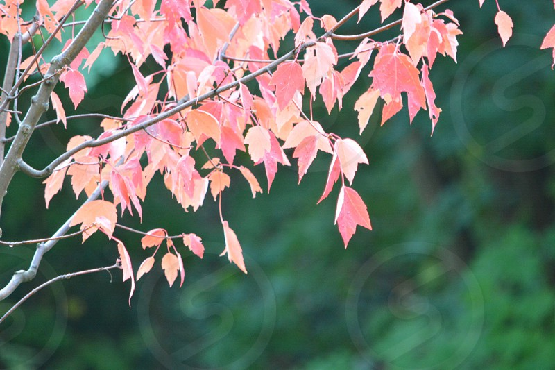 red and yellow leafed tree photo