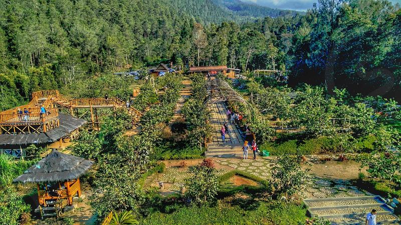 this is guava park location at Kopeng Salatiga Central Java... photo