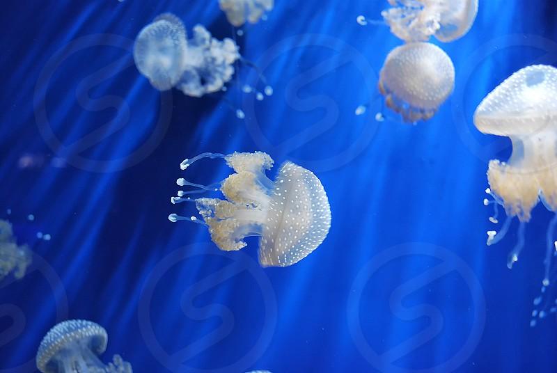 Ocean Creatures photo
