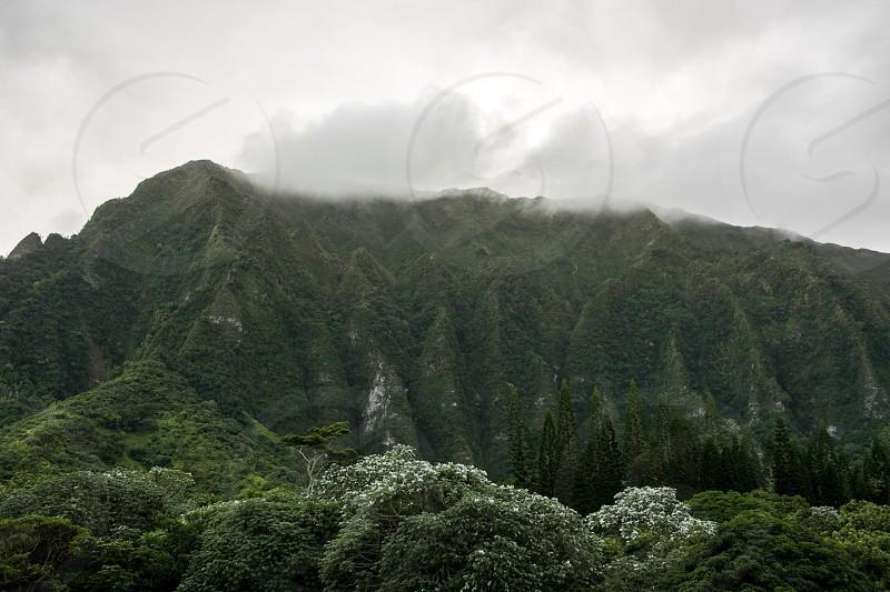 Hawaii Oahu Jurassic park mountains jungle photo