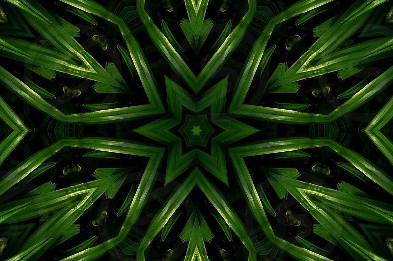 Kaleidoscope image of palm leaves photo