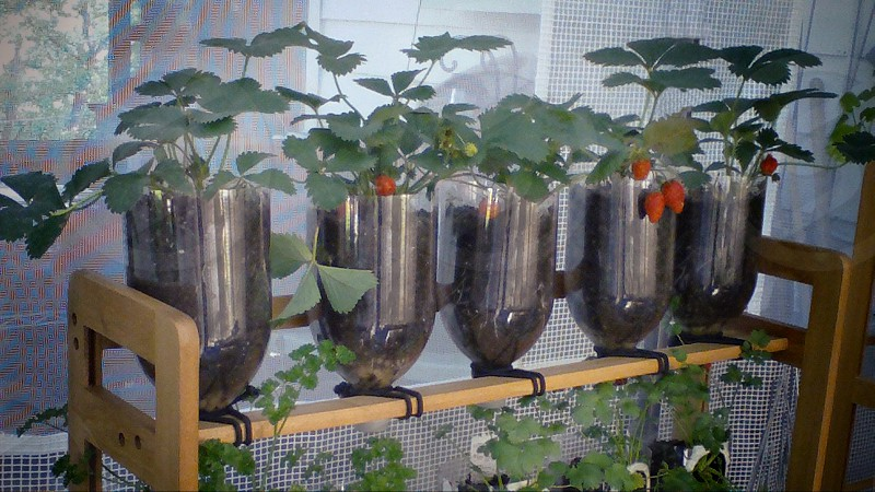 Old CD Rack Garden Recycle - 2 liter soda bottles hold plants and recycle watering from one level to the next. photo
