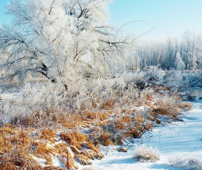 Colorado Winter photo
