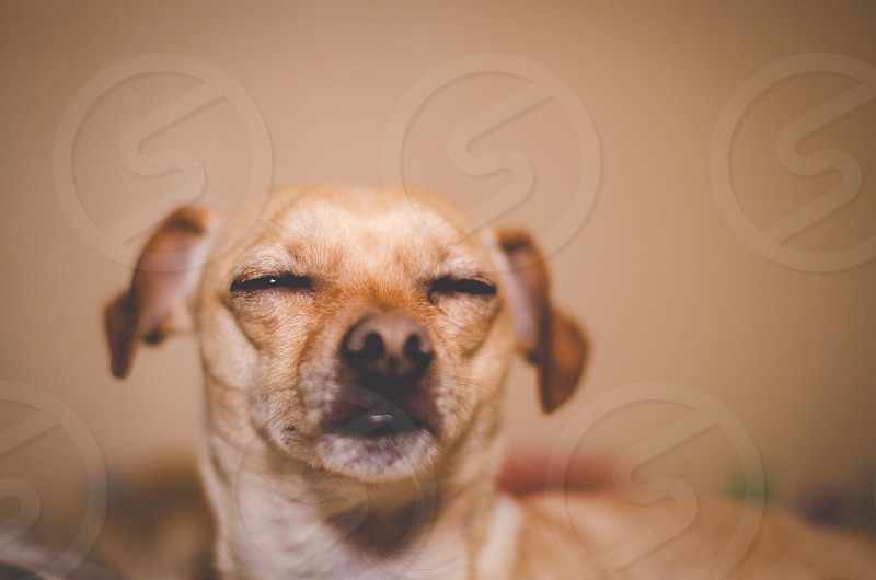 brown short haired dog animal photography photo