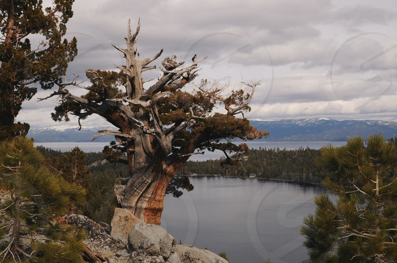 trees around the lake photo