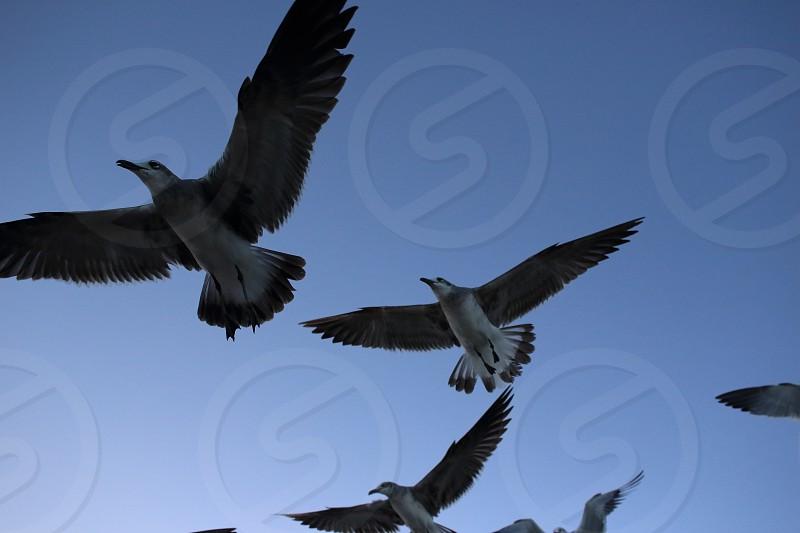 miami seagulls photo