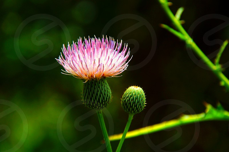 pink flowering plant photo
