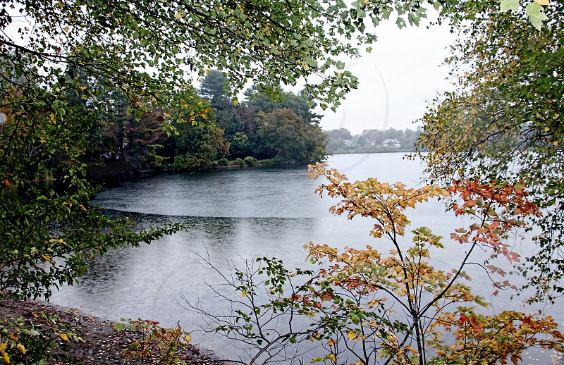 Autumn leaves begin turning colors near a misty lake photo