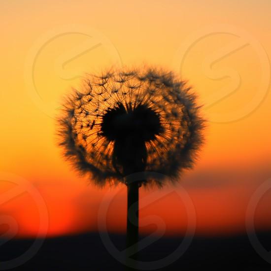 Fluffy Sunset photo