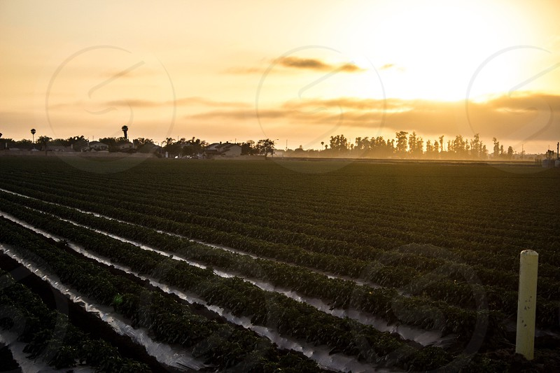 Farm land Oxnard California  photo